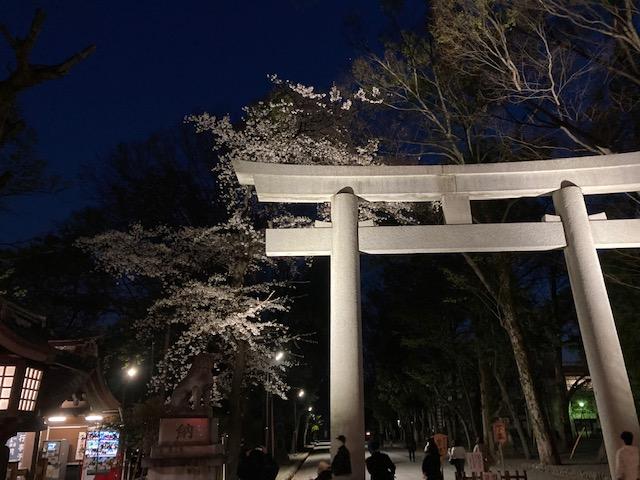 大國魂神社の桜の写真